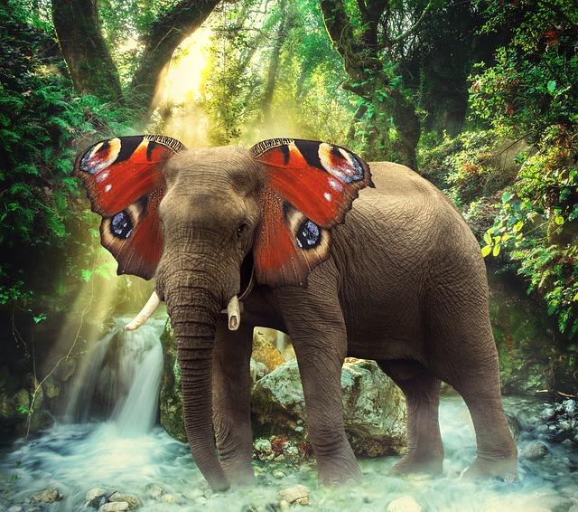 Kelebek kulaklı fil / Sarah Richter